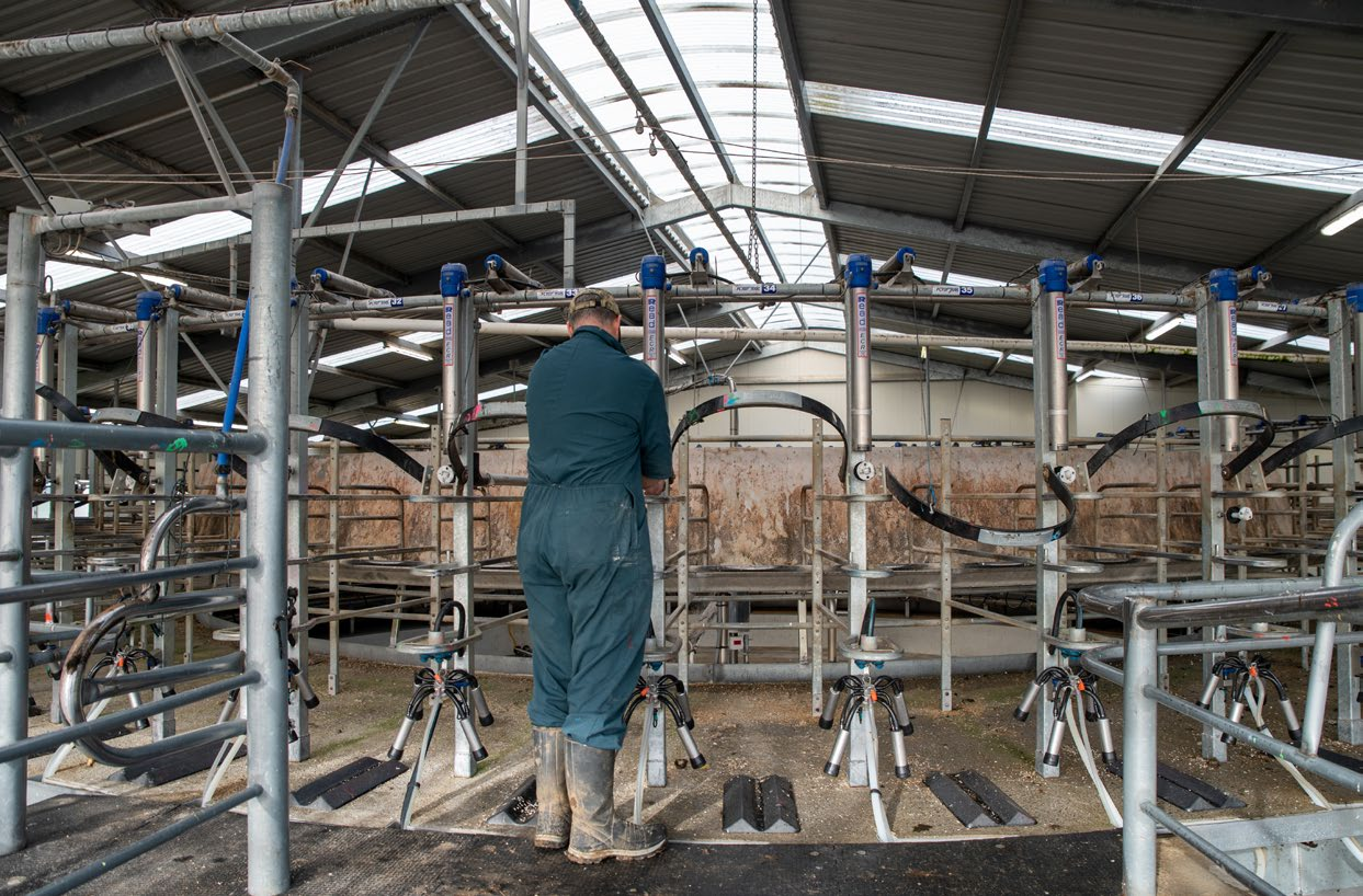 Spencer-Bower checking equipment in one of the farm's three milking sheds.